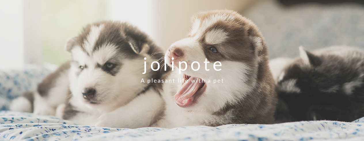 jolipote Apleasant life with a pet